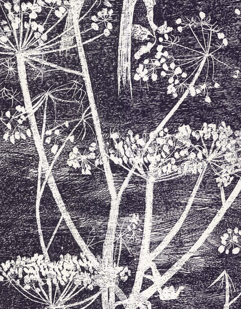 Cow Parsley by Cole & Son - Black / White - Wallpaper - 66/7046 | Black/Charcoal