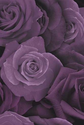 Austin Rose by Arthouse