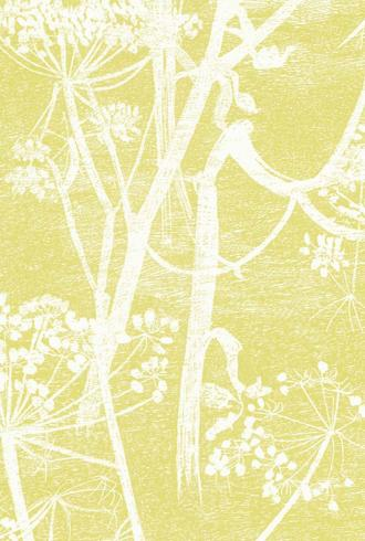 Cow Parsley By Cole and Son
