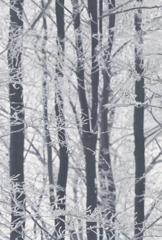 Frosted Wood Silver by Arthouse