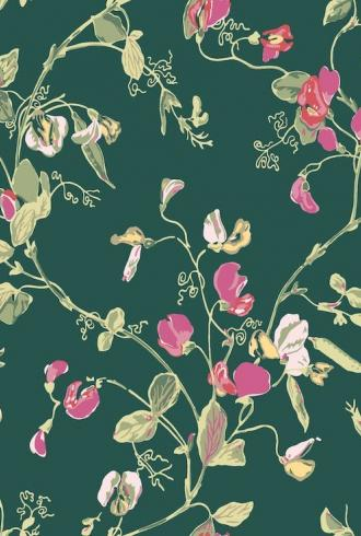 Sweet Pea by Cole & Son