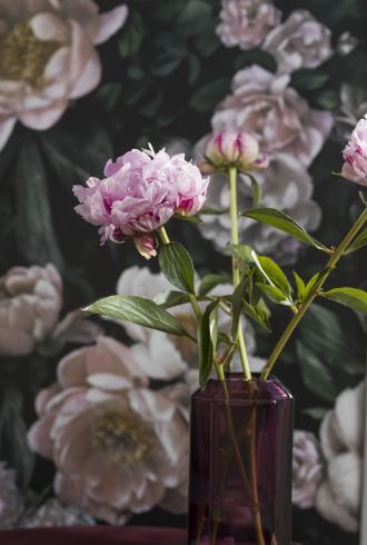 New Dawn Rose by Borastapeter
