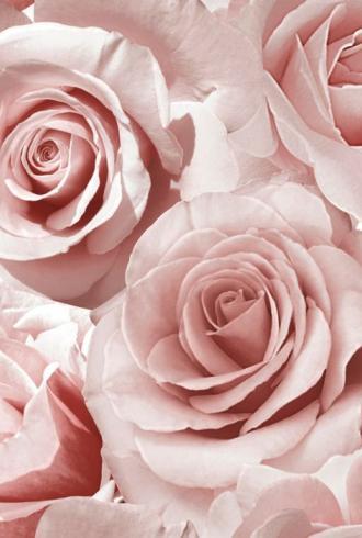 Madison Rose Glitter Wallpaper Raspberry and Blush Pink by Muriva
