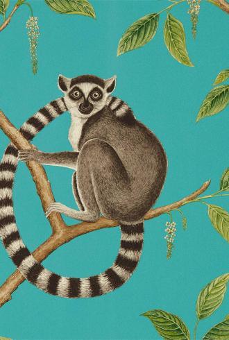 Ringtailed Lemur by Sanderson