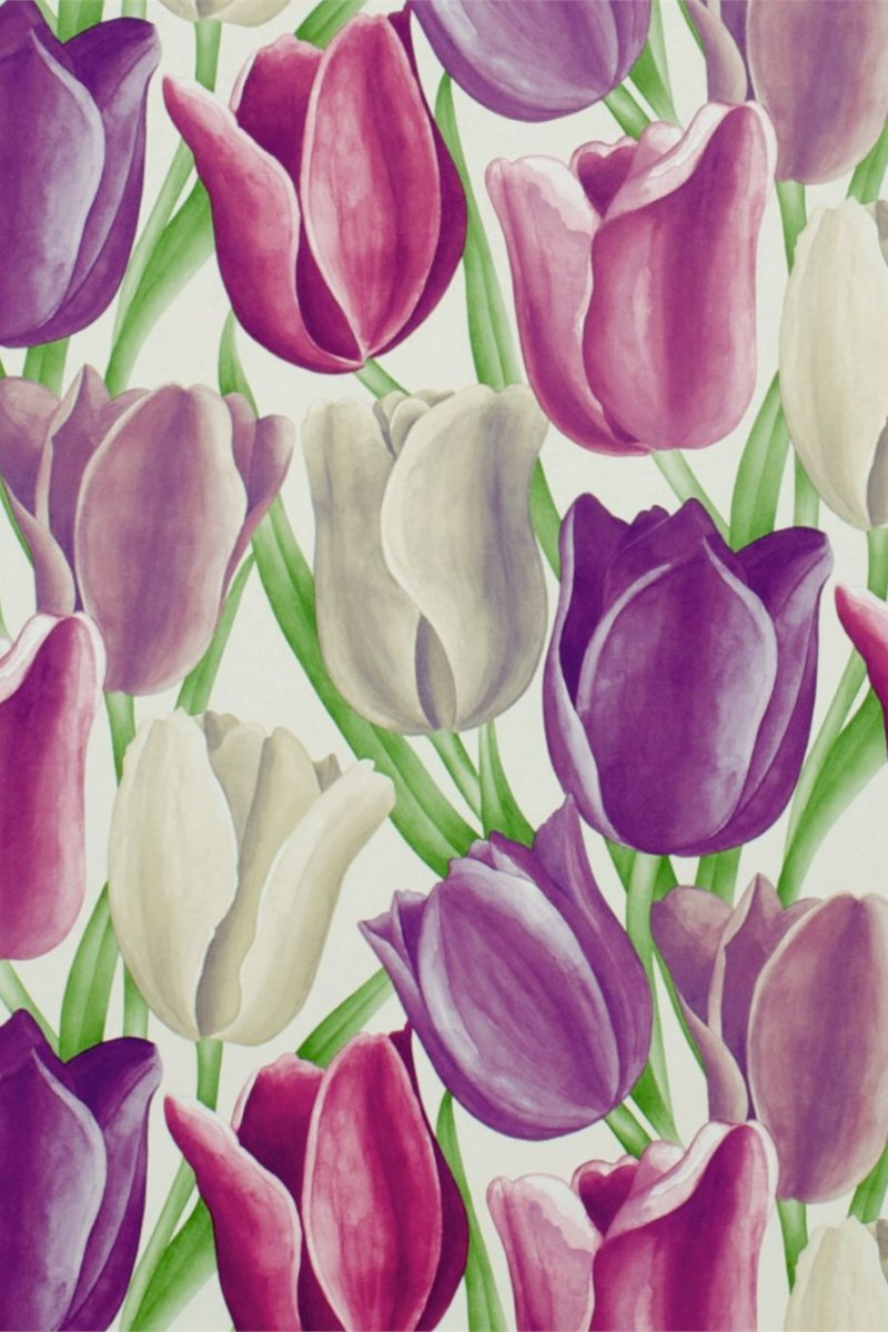 Early Tulips by Sanderson