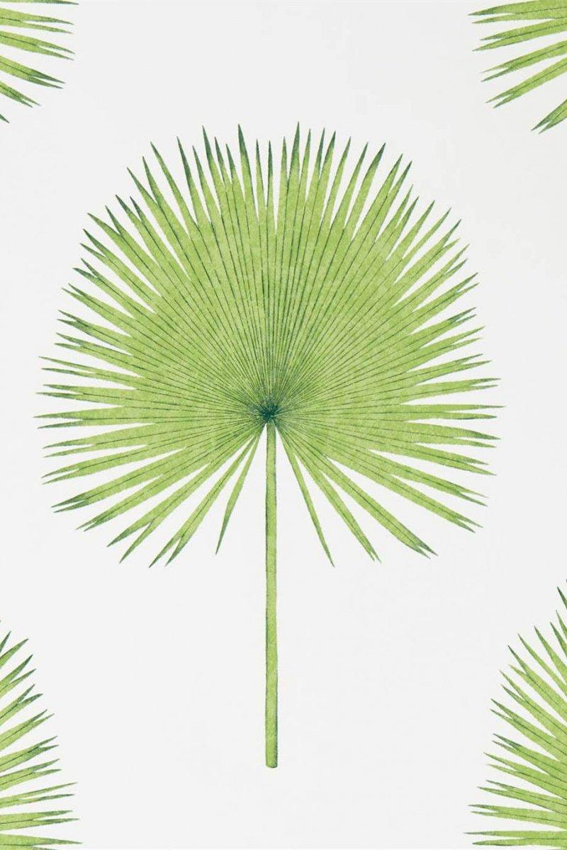 Fan Palm by Sanderson